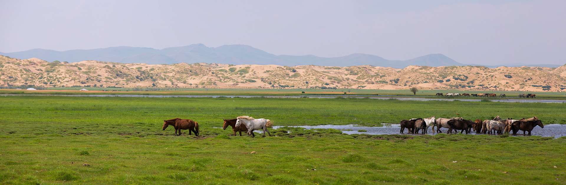 Welcome to Mongolia  The destination of inspiration